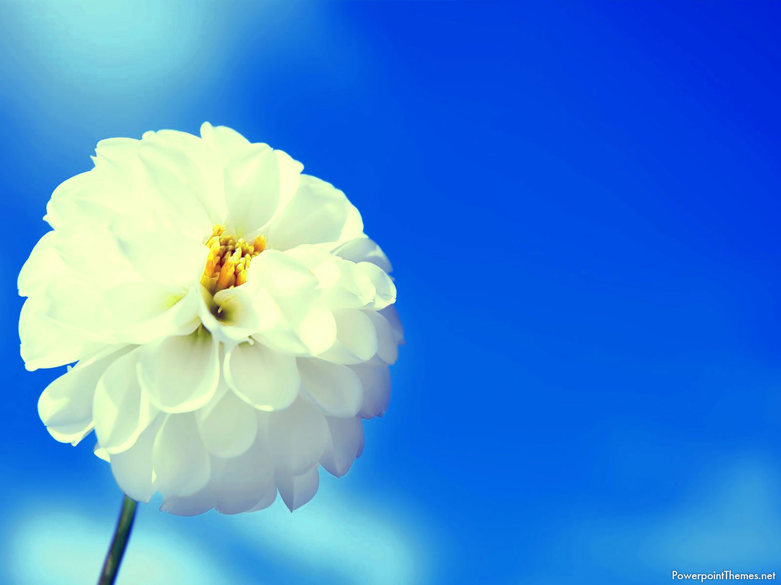 White Flower Background For Powerpoint