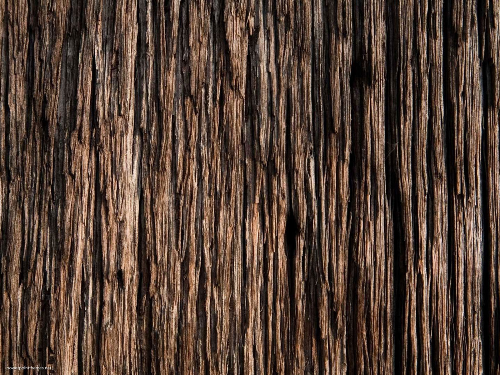 Tree Skin Background
