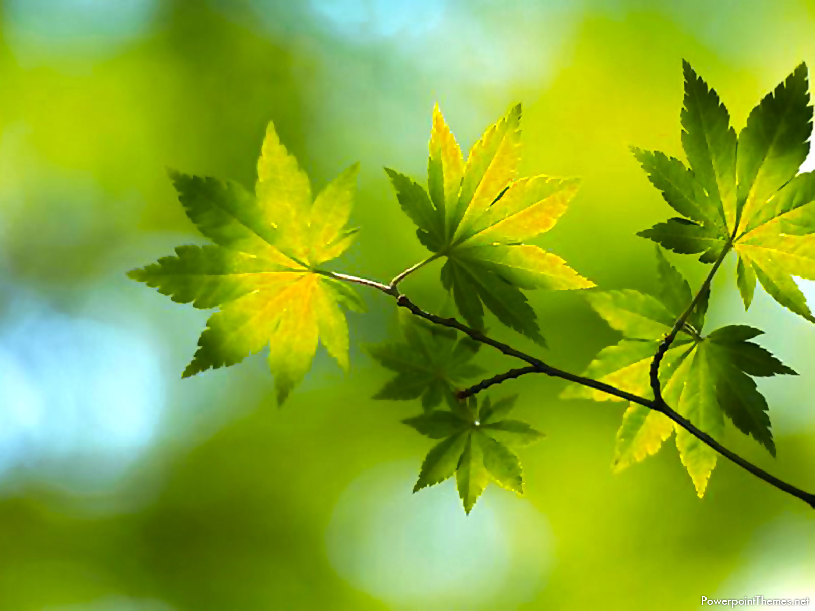 HD Leaves Background
