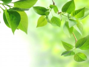 Nature Leaves Powerpoint Background