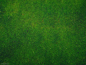 green-grass-background