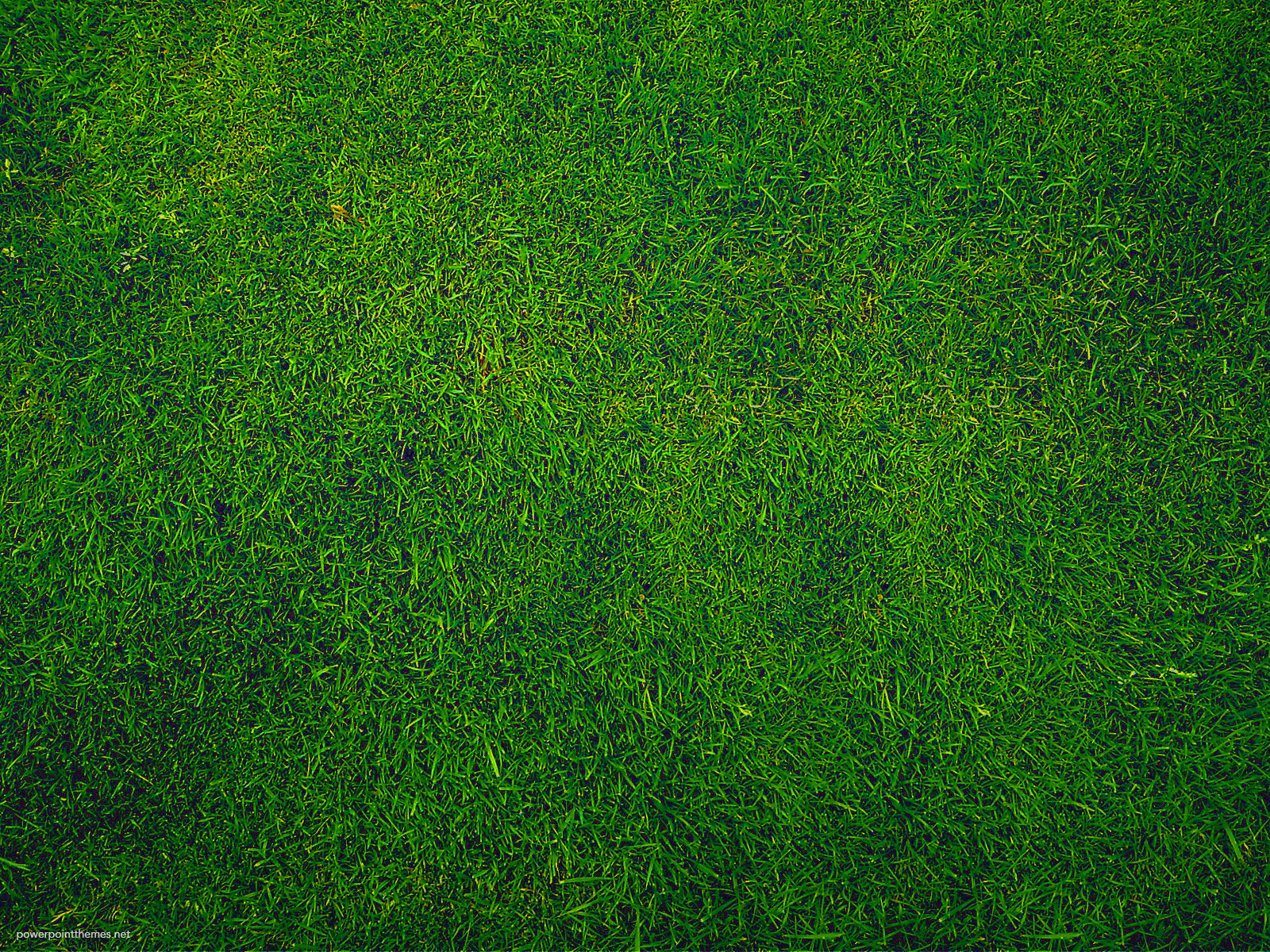 green grass background  u2013 powerpoint themes