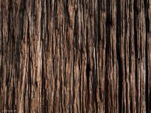 Tree Skin Background